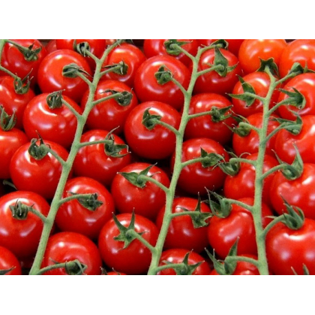 Tomates Rondes 67/82