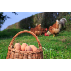 Œufs de poules biologique boite de 6