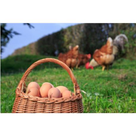 Œufs de poules plein air biologique