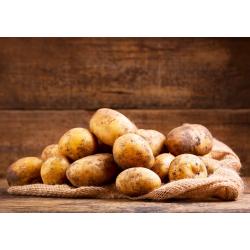 Pommes de terre AB