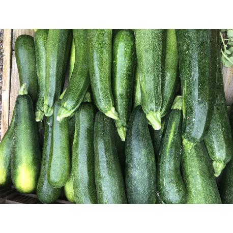 Courgettes producteur jaune/verte