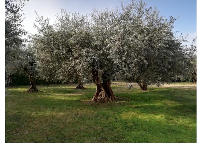 Huile d'olive vierge extra artisanale de Provence 2L