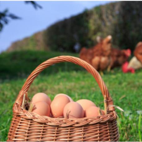 œufs fermier