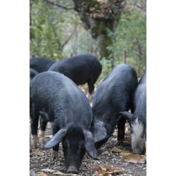 Lonzo Corse de porc Nustrale 500g